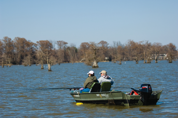 Reelfoot lake b b gives bird 39 s eye view of bald eagles for Reelfoot lake crappie fishing