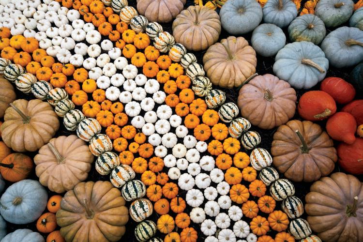 Pumpkin Harvest Display in Jackson, TN