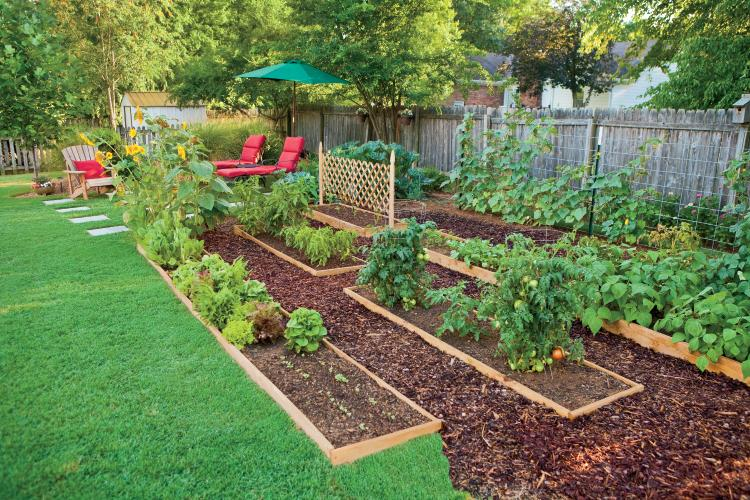 Backyard edible garden ideas photograph edible landscaping for Edible garden design ideas