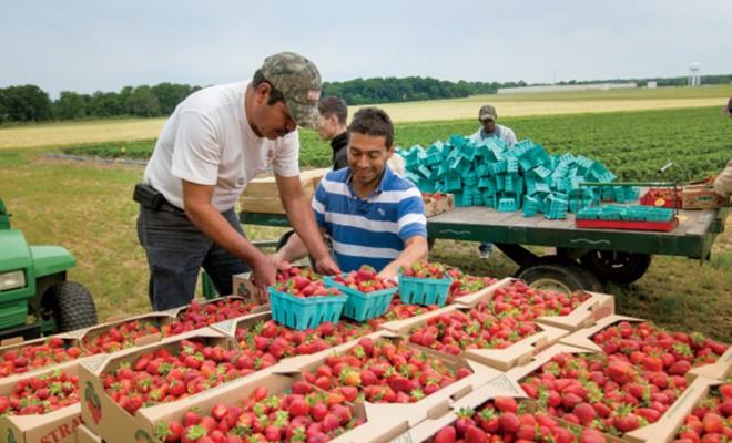 Green Acres Strawberry Farm