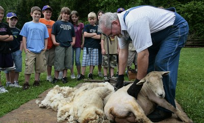 Sheep Shearing Demo