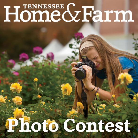 21st Annual Tennessee Farm Bureau Photo Contest
