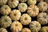 Pretty Painted Pumpkins