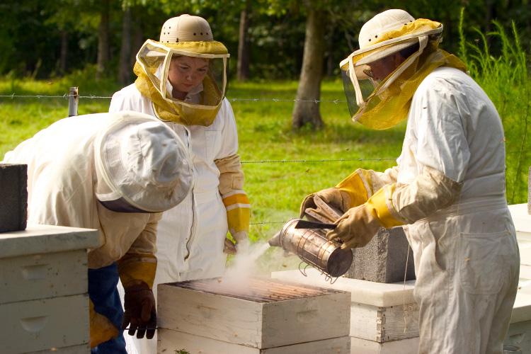 Brush Creek Honey Farm