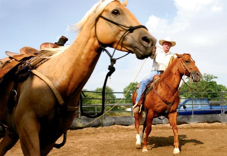 Jack Lawrence Horse Whisperer