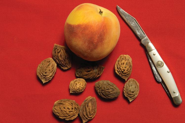 peach seed carvings