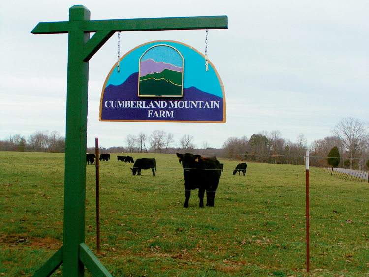 Cumberland Mountain Farm Cattle in Crossville, TN