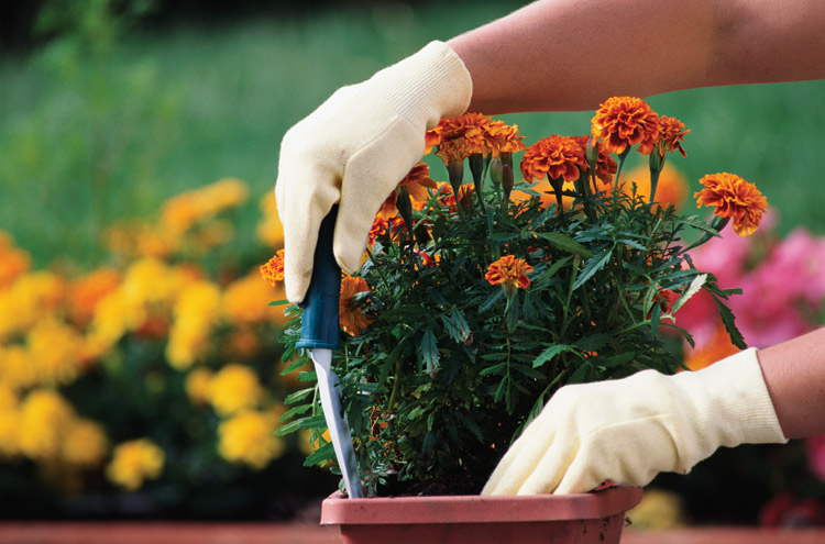 Gardening workout burns calories tennessee home and farm for How many calories does gardening burn