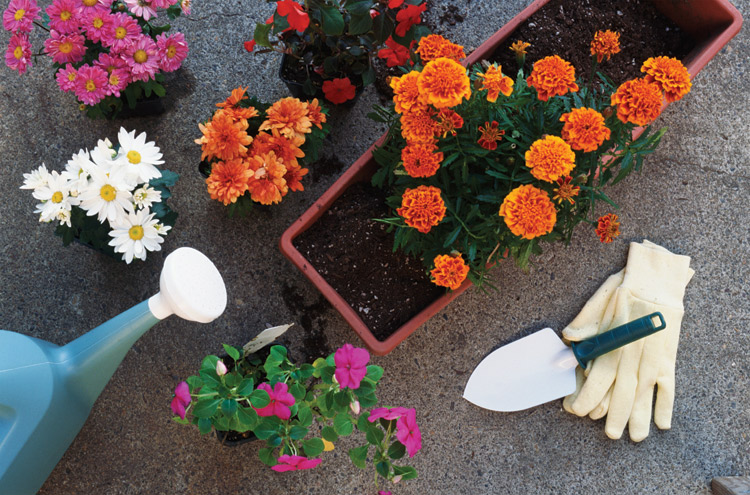 gardening, flowers