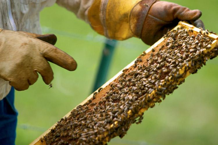 Beekeeping in Tennessee