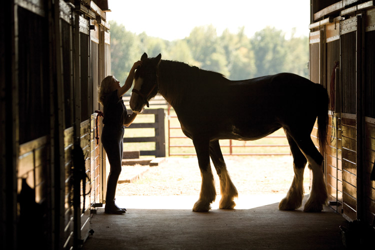 Camp Clydesdale Invites Kids To Ride Rare Horses