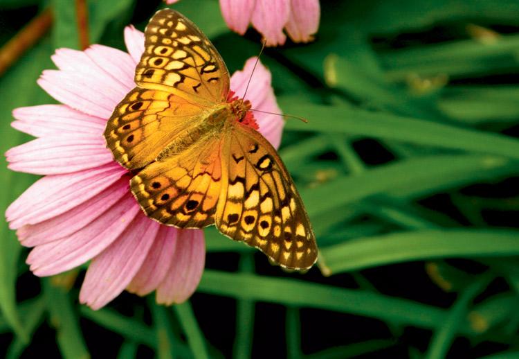 Native Butterfly Garden at Burgess Falls