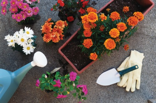 good gifts for gardeners include gloves and gardening tools