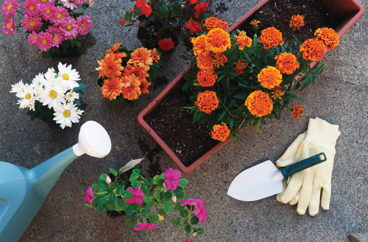 Good gifts for gardeners include gloves and gardening tools.
