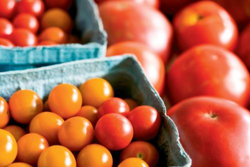 TN Tomato festivals
