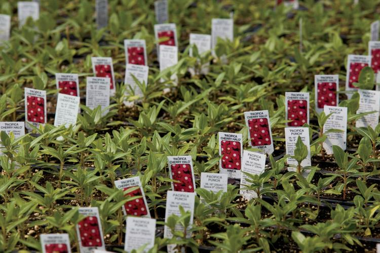 Thousands Of Plant Labels Are Lined Up In Greenhouses At Mary S Greenhouse Inc