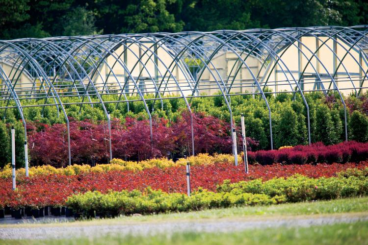 Rows of greenhouses as seen from the road at Four M Greenhouses in McMinnville, Tennessee.
