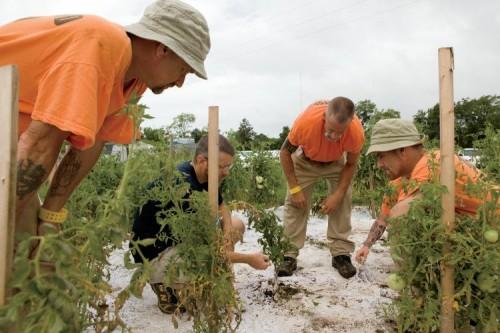 Inmates work in the Garden of Hope, Murfreesboro, TN