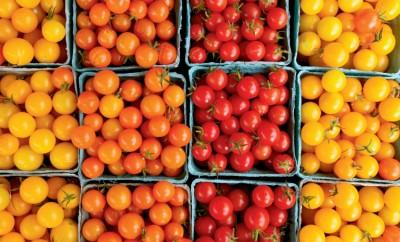 tomato farm facts