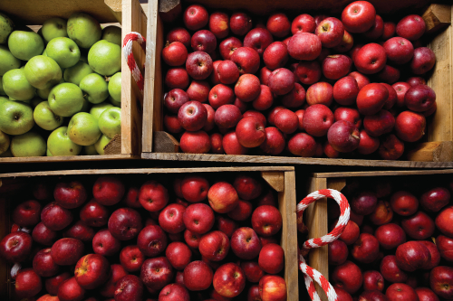 Farm Facts: Apples