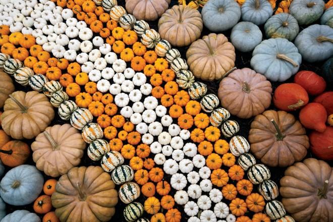 Pumpkin Field Day