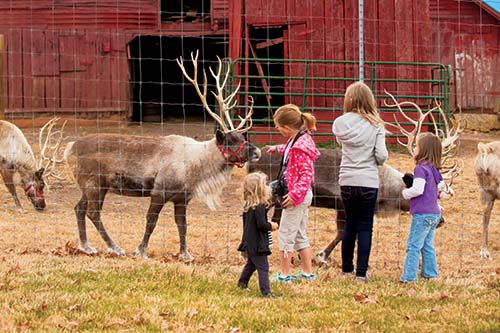 Reindeer tour
