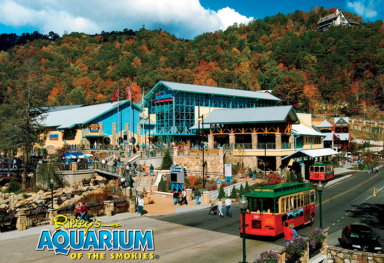 adult activities in gatlinburg tn