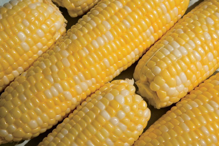 Sweet Corn facts