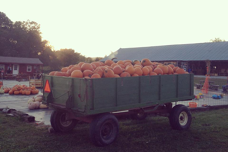 Myers Pumpkin Patch