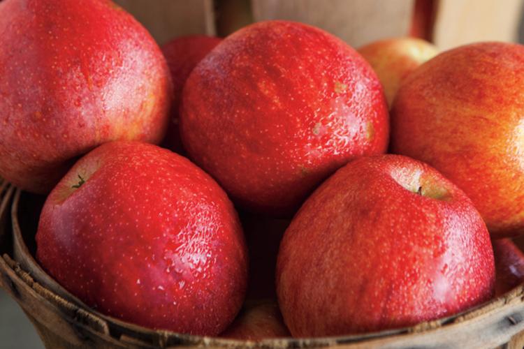 Tennessee food festivals; Unicoi Apple Festival
