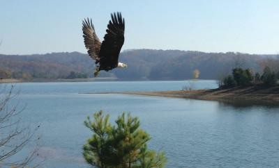 Reelfoot Eagle Tours