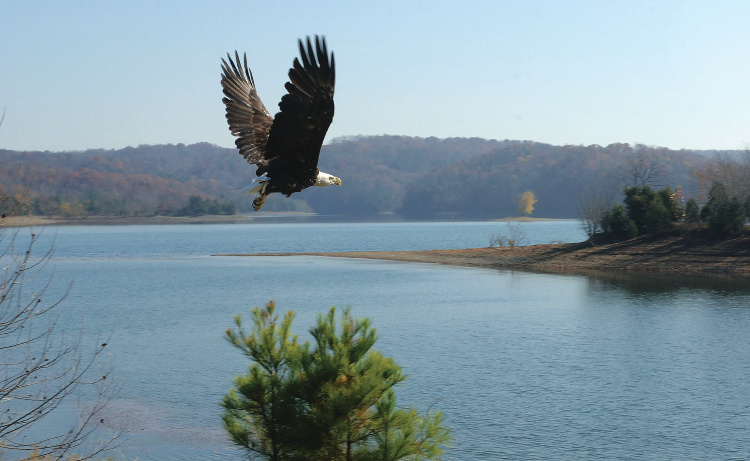 Reelfoot Eagle Tours