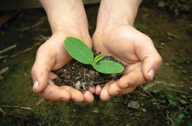 gardening dirt