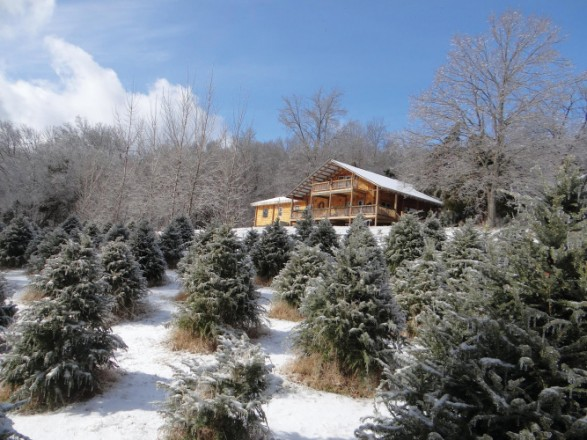 Wildwood Christmas Tree Farm
