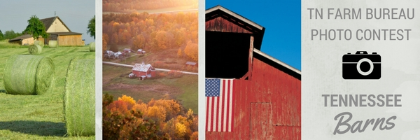 tn barns photo contest