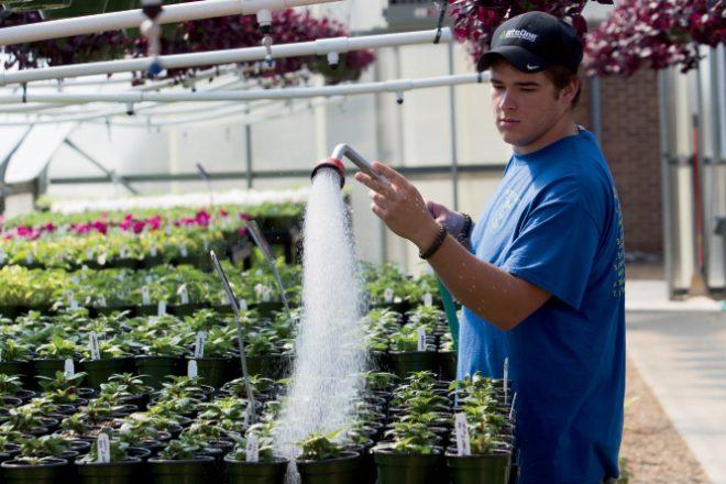 FFA greenhouse sales