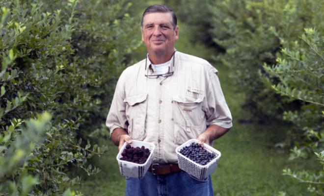 berry farms