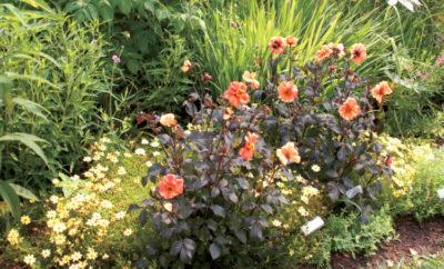 perennial planting tips