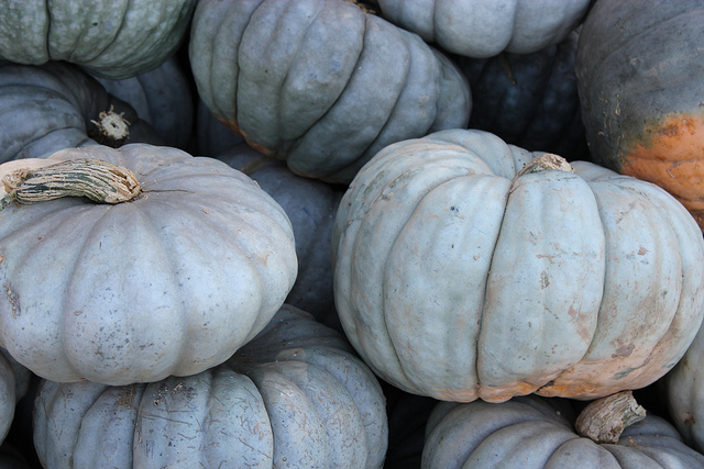 Blue Doll Pumpkin