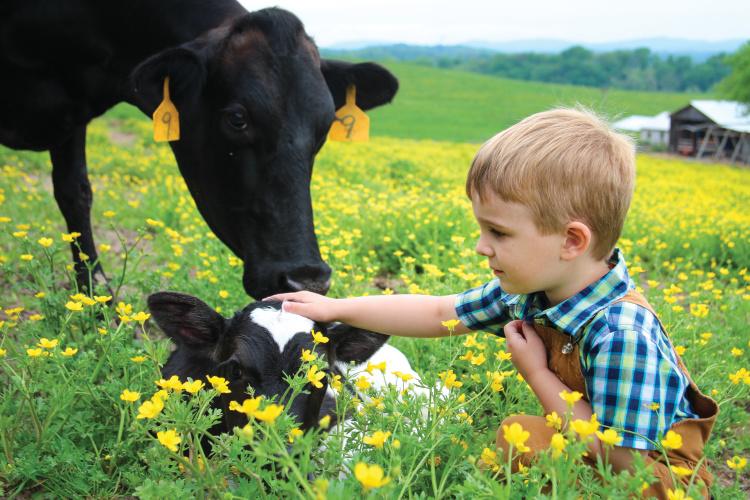 TN Home and Farm Photo Contest 2019