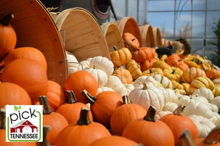 Pick Tennessee fall agritourism