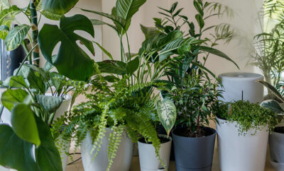 houseplants in winter